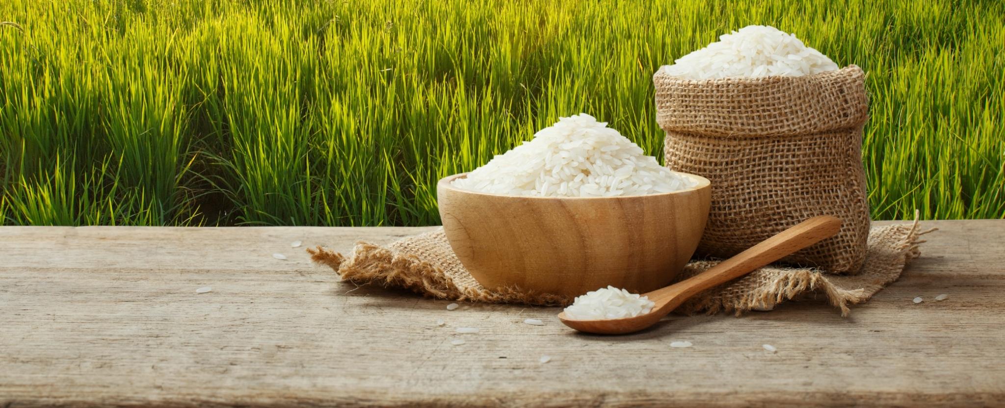 สมาคมชาวนาและเกษตรกรไทยจี้รัฐส่งเสริมข้าวพื้นนุ่ม